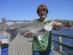 Mississippi river fish advisories pcb reports for Clements fishing barge