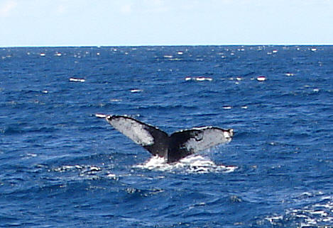 Click photo to see our birding/whaling excursion to San Jose del Cabo