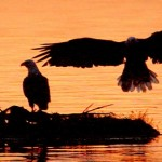 cropped-eagle-sil-header.jpg