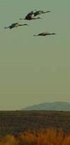 cranesland
